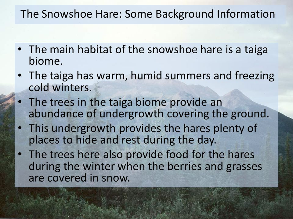 The Snowshoe Hare: Some Background Information
