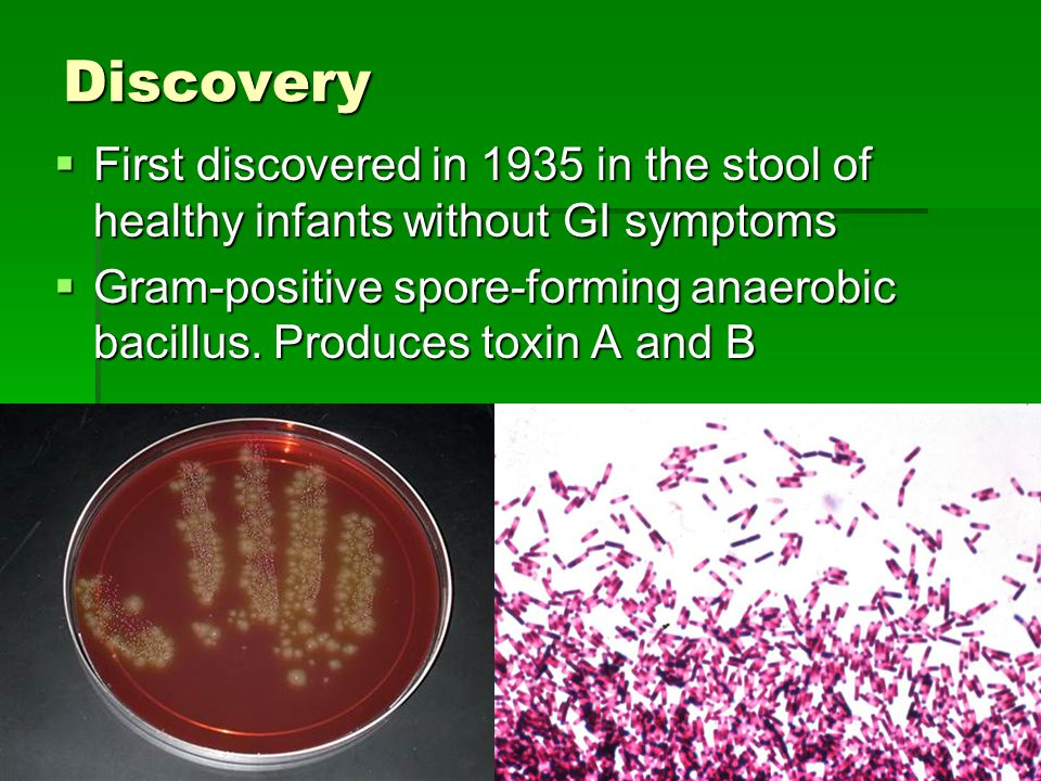 Discovery First discovered in 1935 in the stool of healthy infants without GI symptoms.