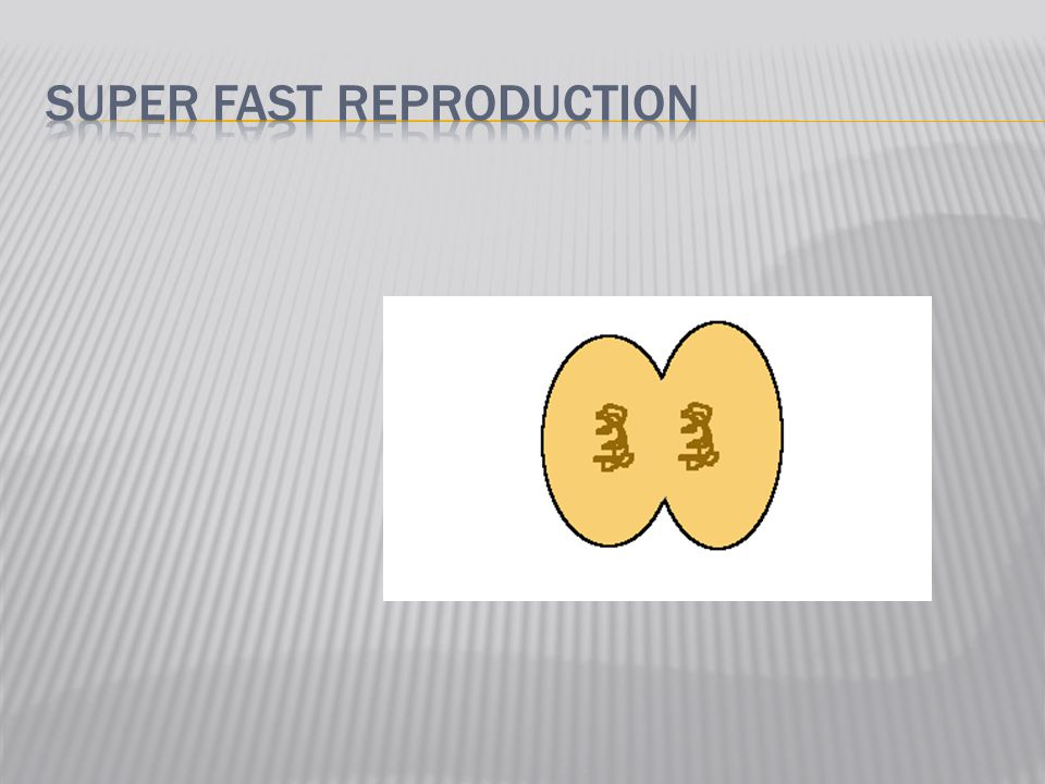 Super fast reproduction