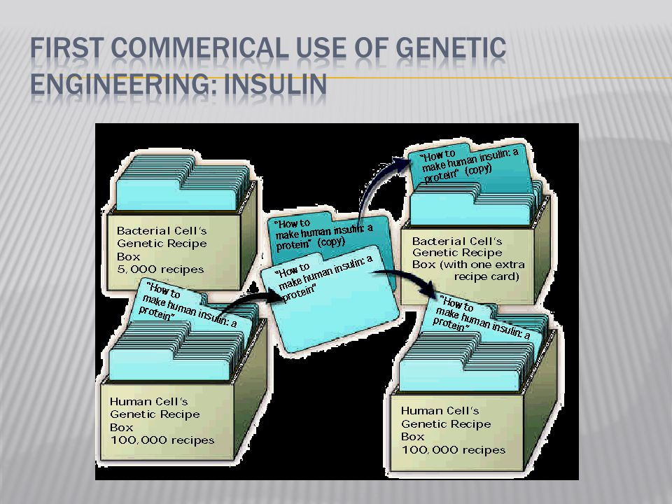 First commerical use of genetic engineering: insulin