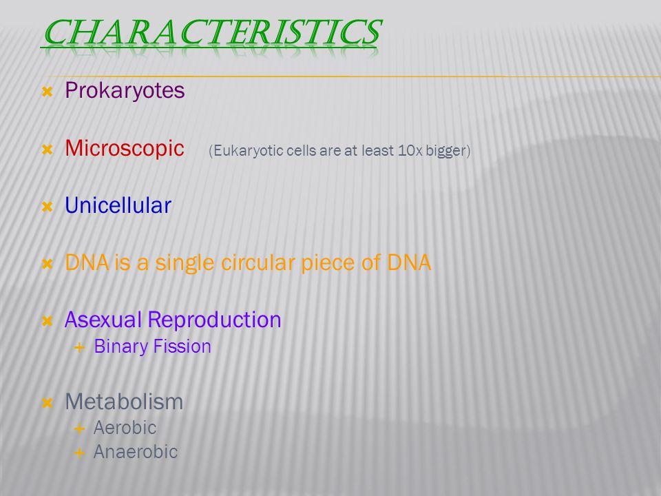 Characteristics Prokaryotes