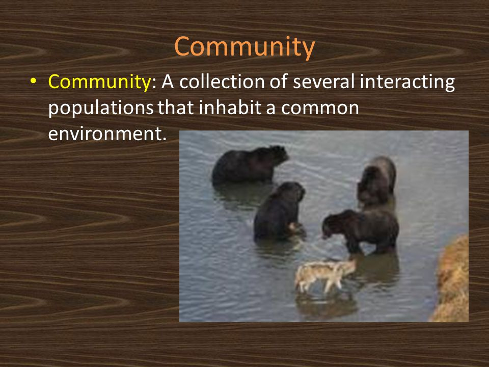 Community Community: A collection of several interacting populations that inhabit a common environment.