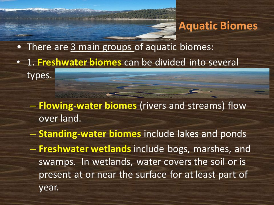 Aquatic Biomes There are 3 main groups of aquatic biomes: