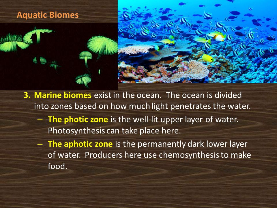 Aquatic Biomes Marine biomes exist in the ocean. The ocean is divided into zones based on how much light penetrates the water.