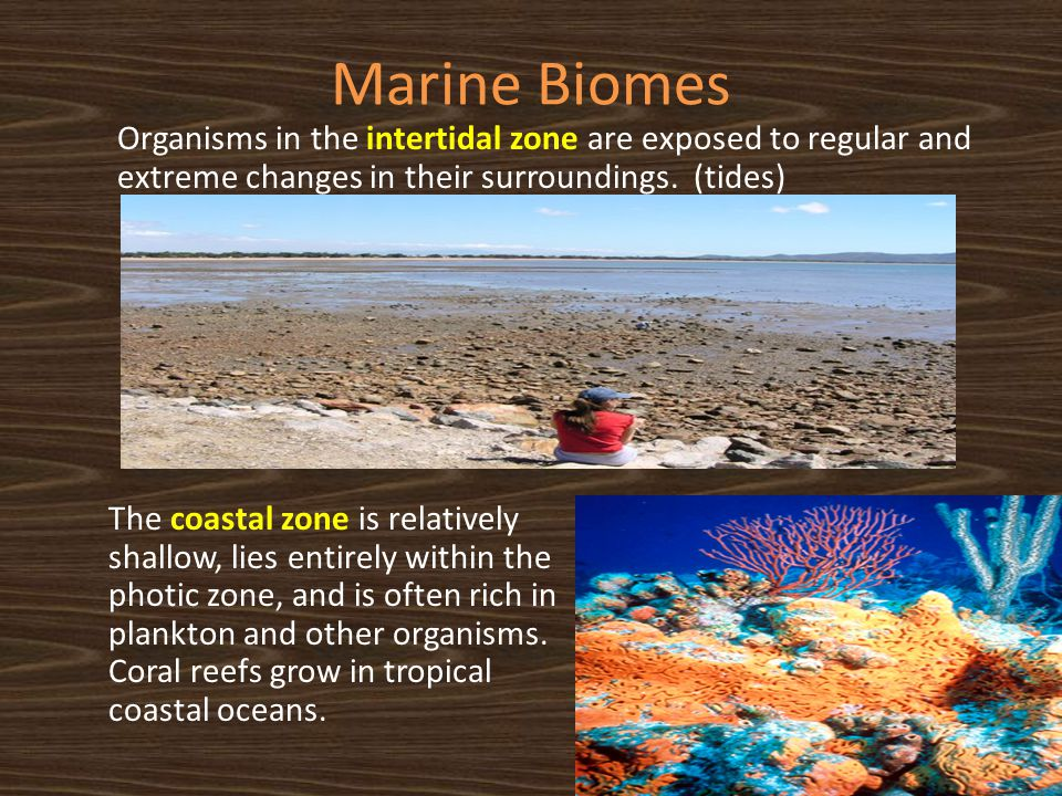 Marine Biomes Organisms in the intertidal zone are exposed to regular and extreme changes in their surroundings. (tides)
