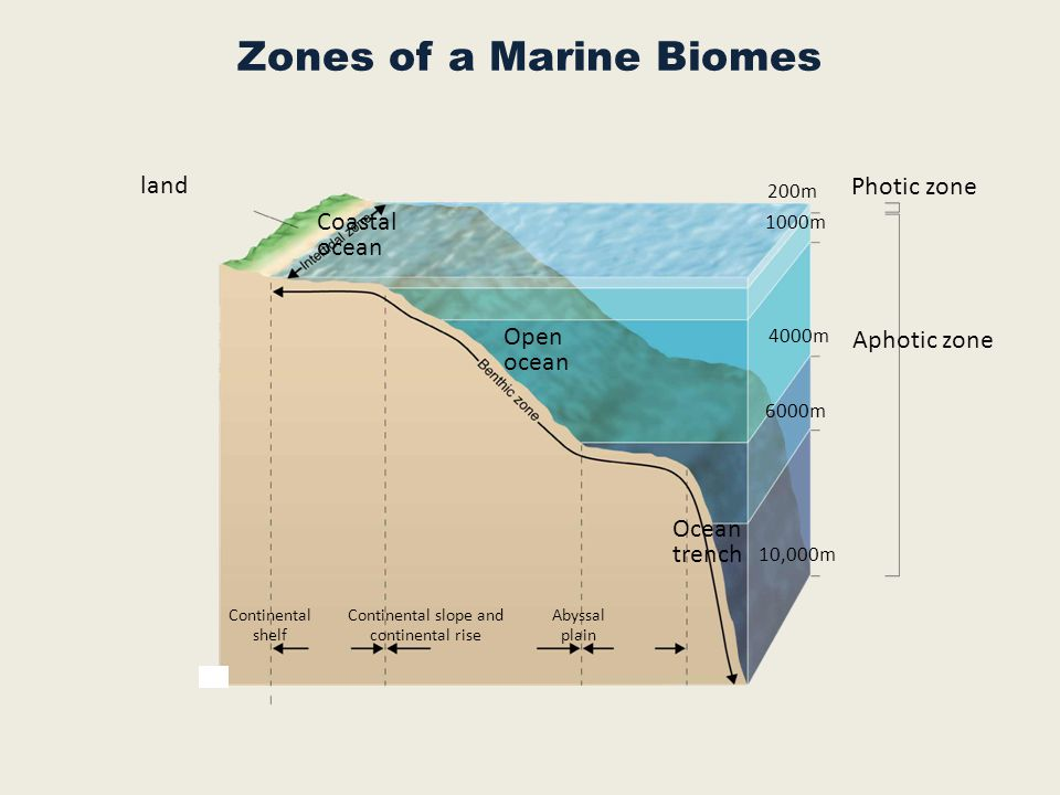 Zones of a Marine Biomes