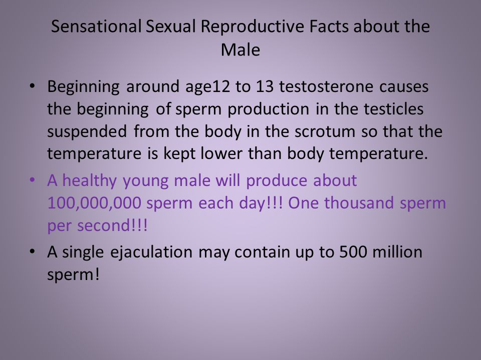 Sensational Sexual Reproductive Facts about the Male