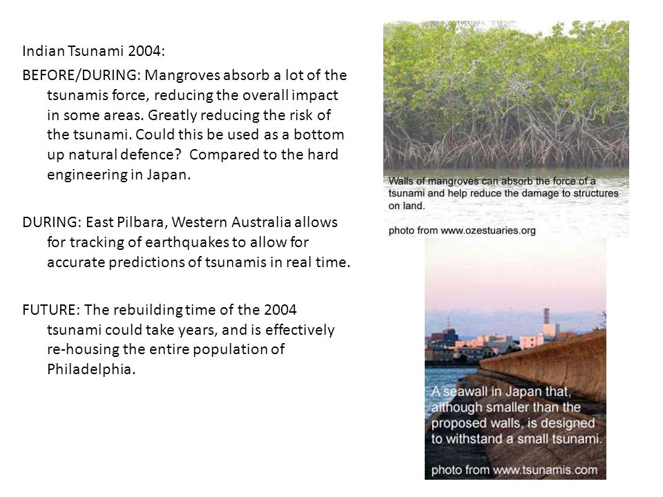 Indian Tsunami 2004: BEFORE/DURING: Mangroves absorb a lot of the tsunamis force, reducing the overall impact in some areas.
