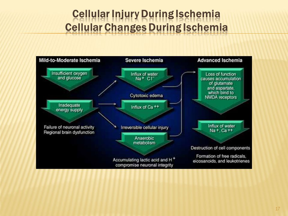 Cellular Injury During Ischemia Cellular Changes During Ischemia