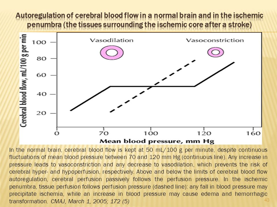 Autoregulation of cerebral blood flow in a normal brain and in the ischemic penumbra (the tissues surrounding the ischemic core after a stroke)