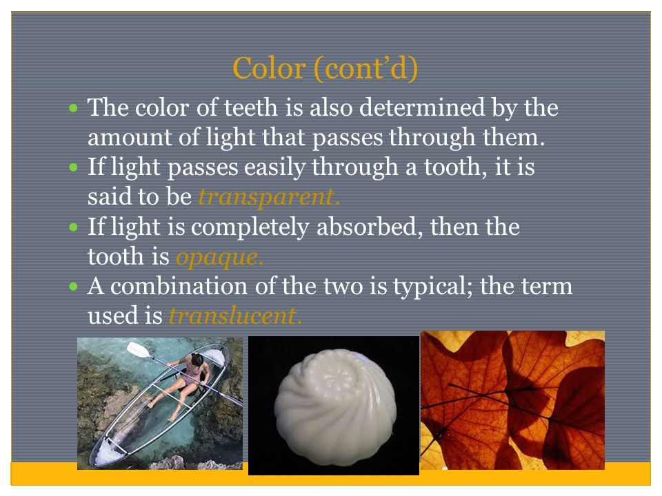 Color (cont'd) The color of teeth is also determined by the amount of light that passes through them.