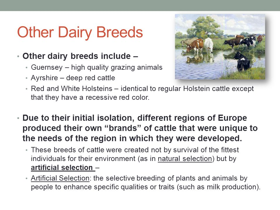 Other Dairy Breeds Other dairy breeds include –