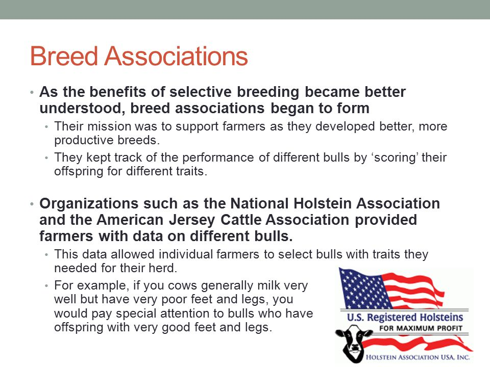 Breed Associations As the benefits of selective breeding became better understood, breed associations began to form.