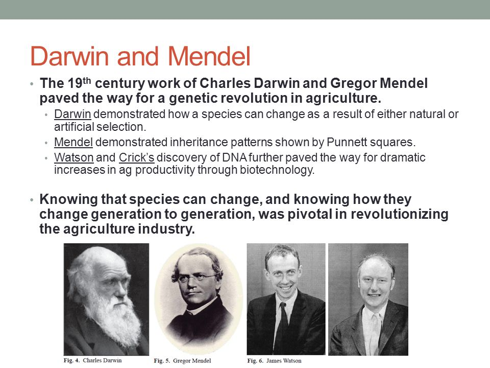 Darwin and Mendel The 19th century work of Charles Darwin and Gregor Mendel paved the way for a genetic revolution in agriculture.