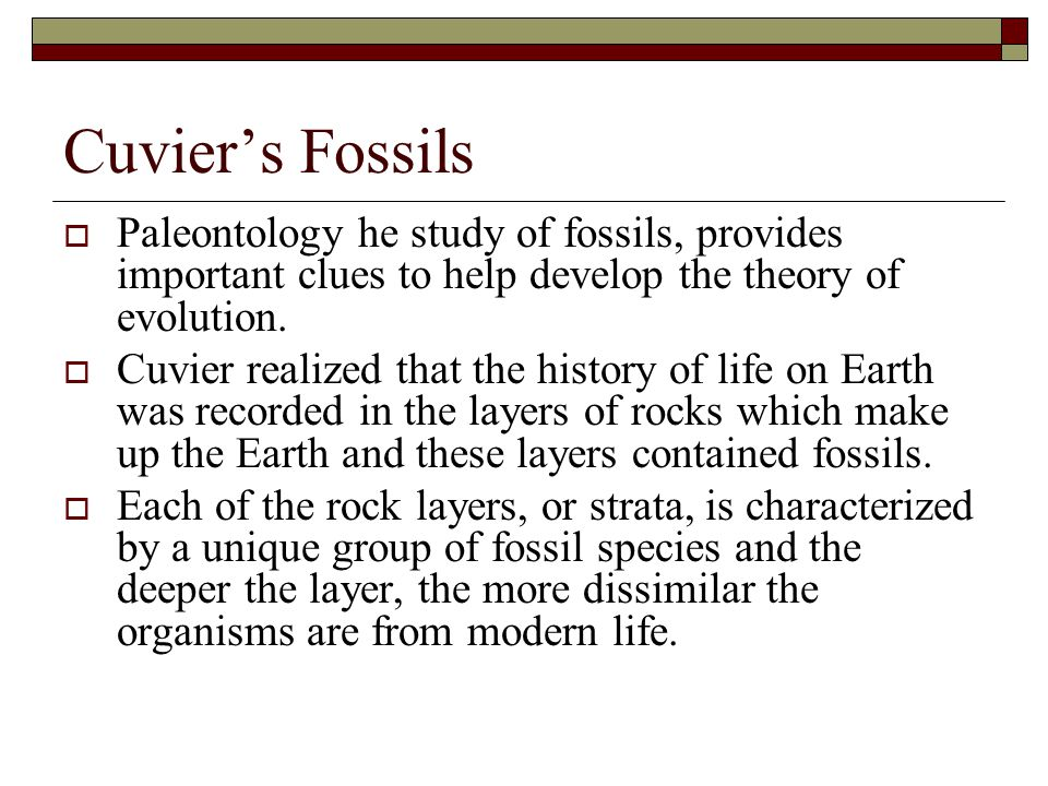 Cuvier's Fossils Paleontology he study of fossils, provides important clues to help develop the theory of evolution.