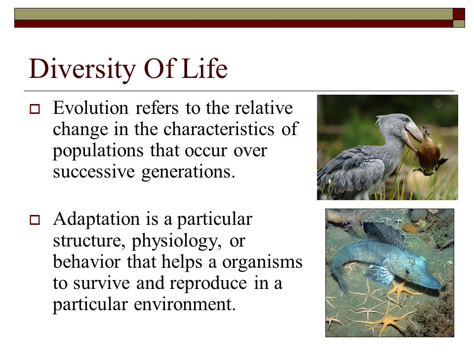 Diversity Of Life Evolution refers to the relative change in the characteristics of populations that occur over successive generations.
