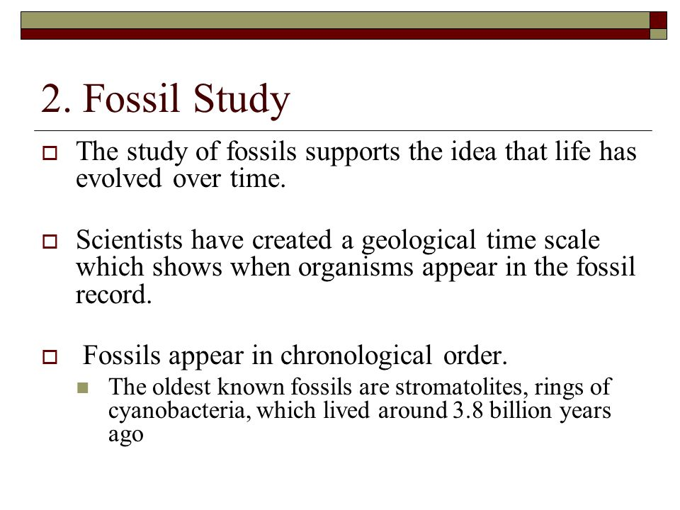 2. Fossil Study The study of fossils supports the idea that life has evolved over time.