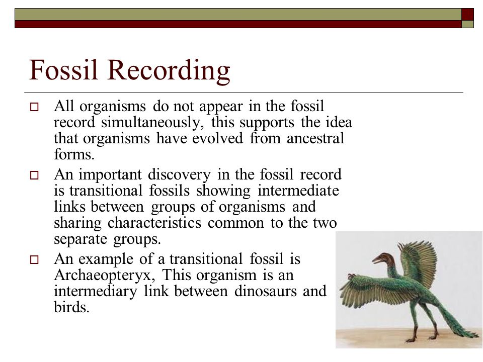 Fossil Recording