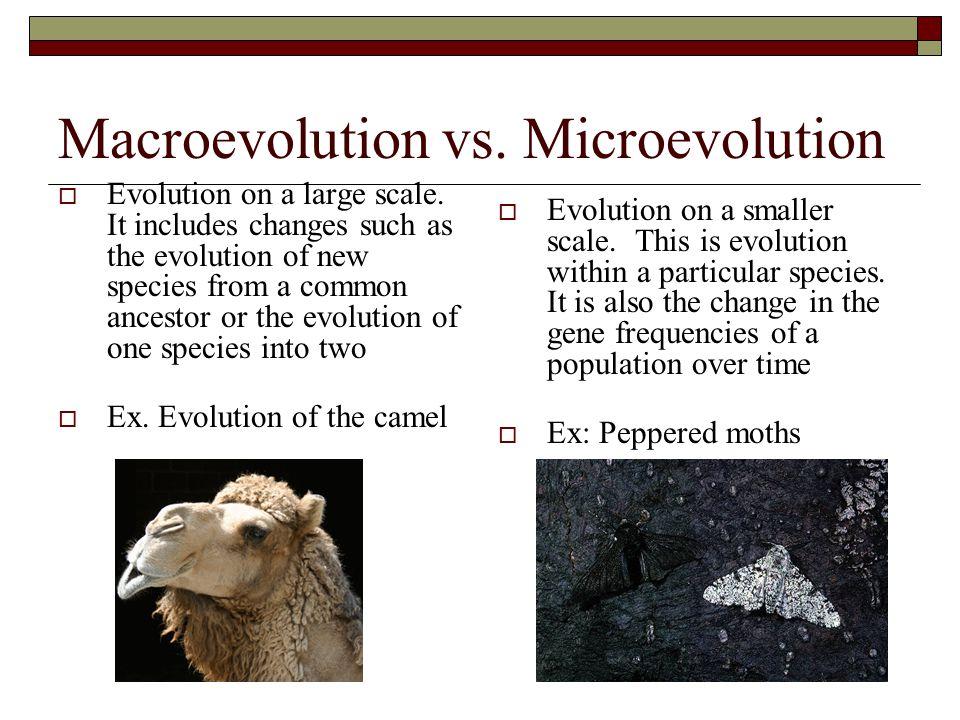 Macroevolution vs. Microevolution
