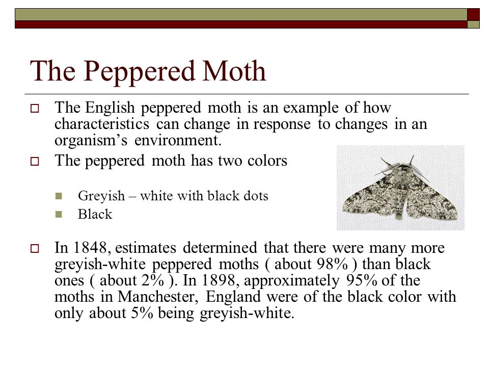 The Peppered Moth The English peppered moth is an example of how characteristics can change in response to changes in an organism's environment.