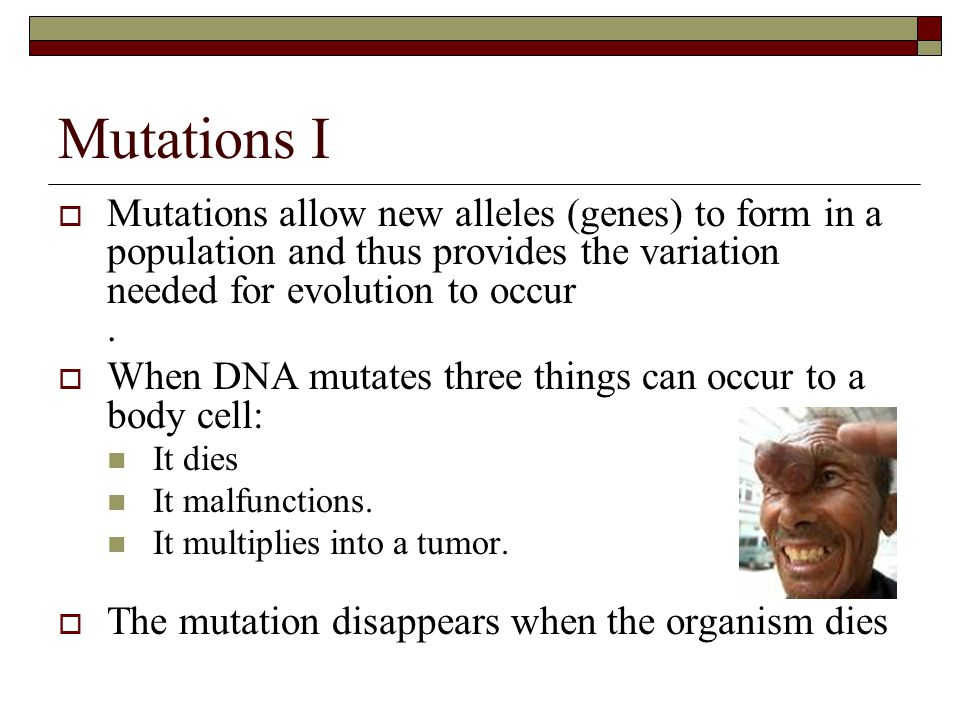 What Conditions Are Needed For Natural Selection To Occur