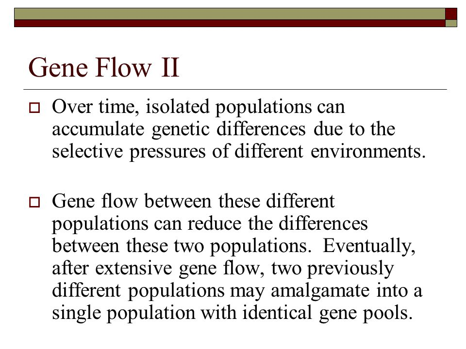 Gene Flow II Over time, isolated populations can accumulate genetic differences due to the selective pressures of different environments.