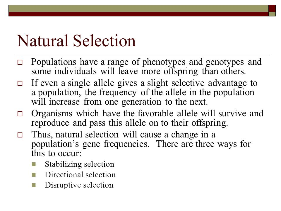 Natural Selection Populations have a range of phenotypes and genotypes and some individuals will leave more offspring than others.