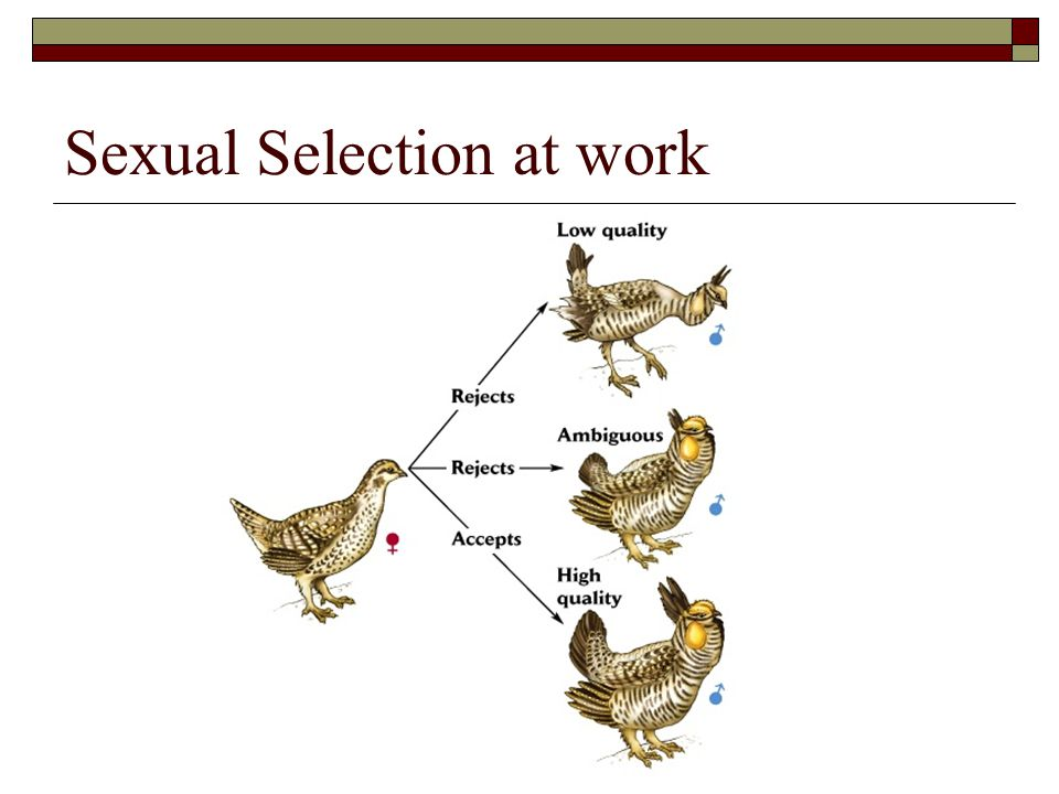 Sexual Selection at work