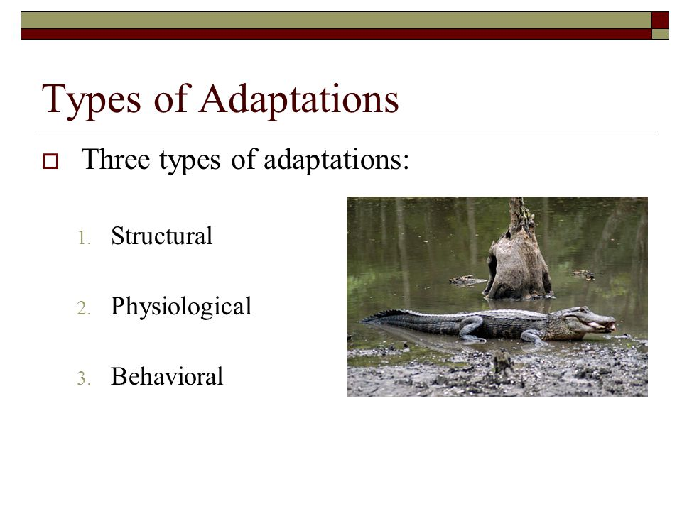Types of Adaptations Three types of adaptations: Structural