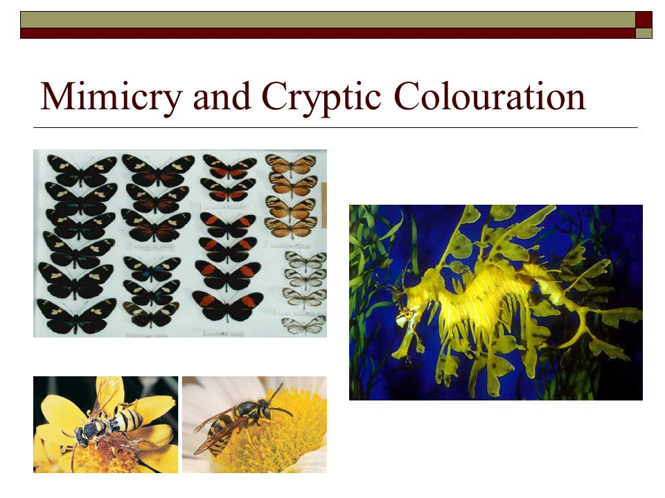 Mimicry and Cryptic Colouration