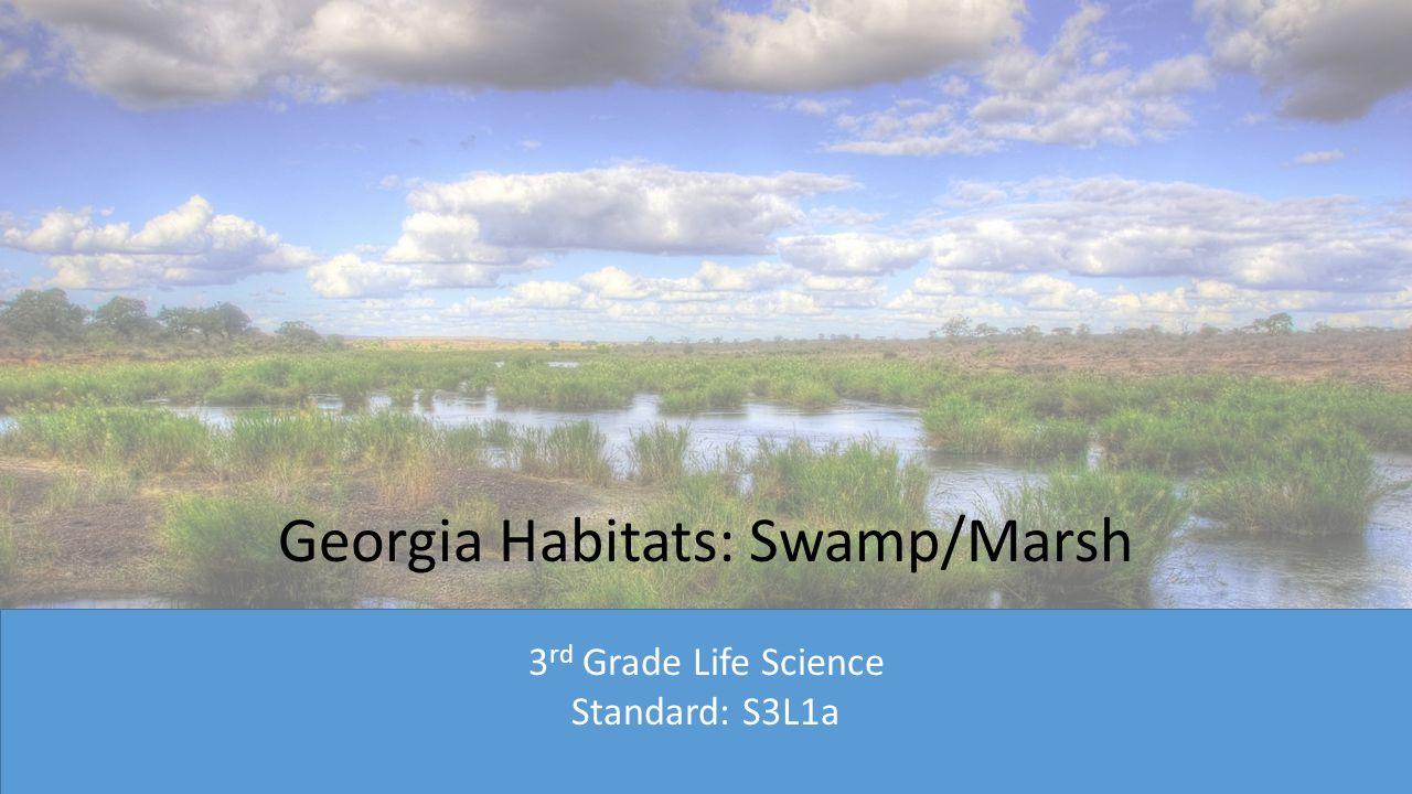 Georgia Habitats: Swamp/Marsh