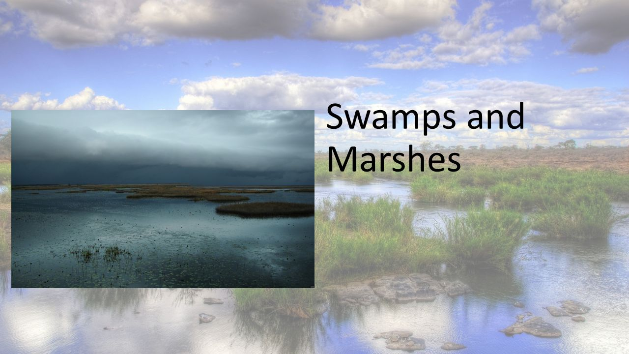 Swamps and Marshes