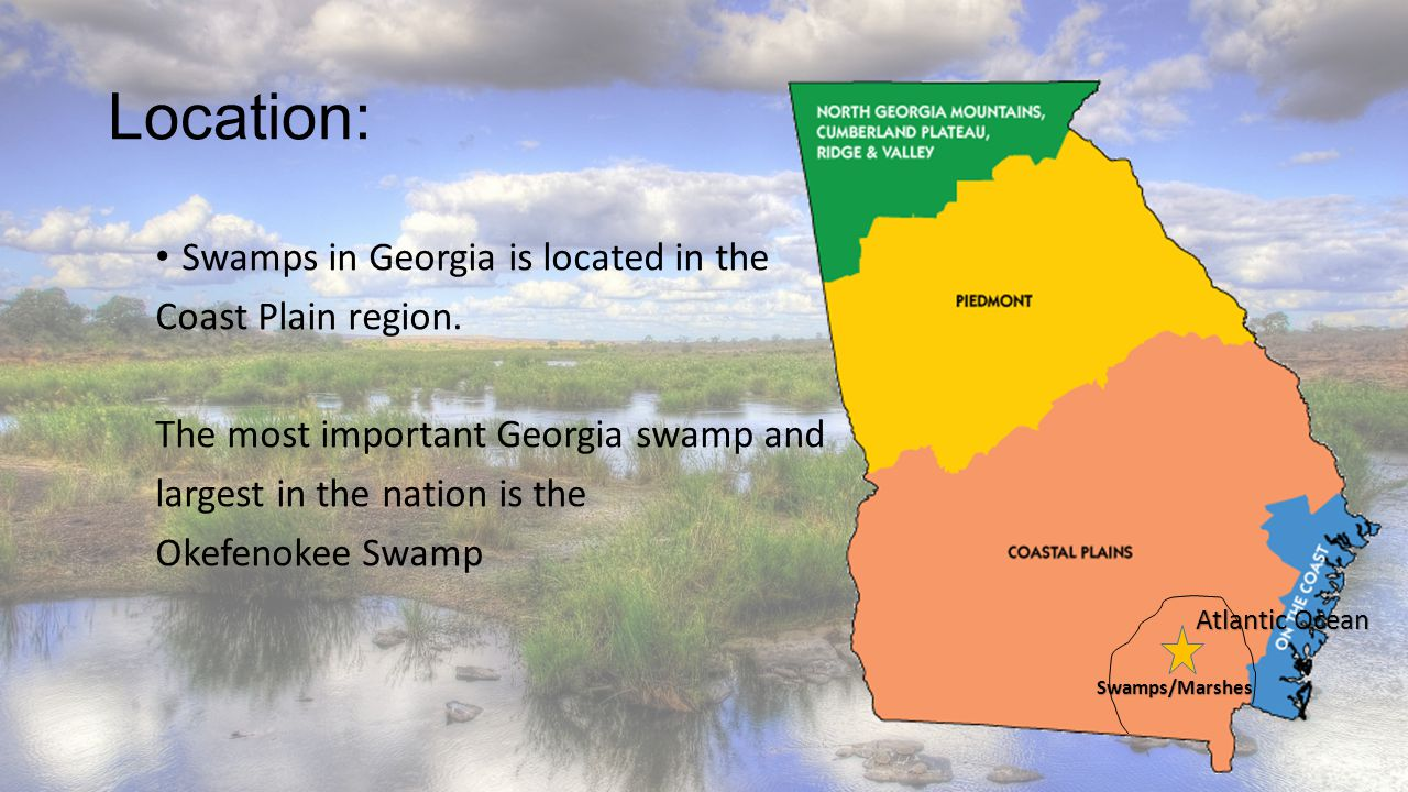 Location: Swamps in Georgia is located in the Coast Plain region.