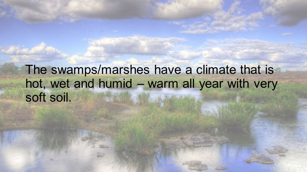 The swamps/marshes have a climate that is hot, wet and humid – warm all year with very soft soil.