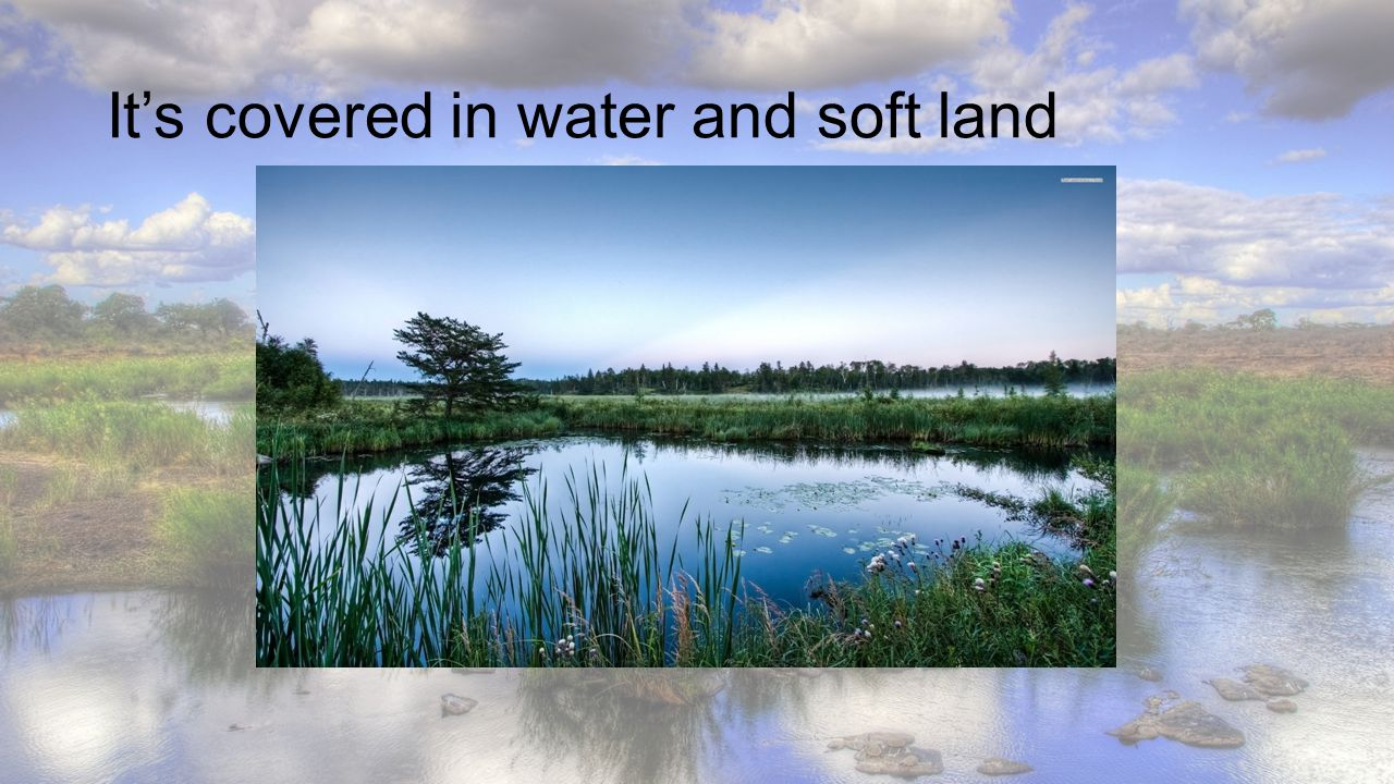 It's covered in water and soft land