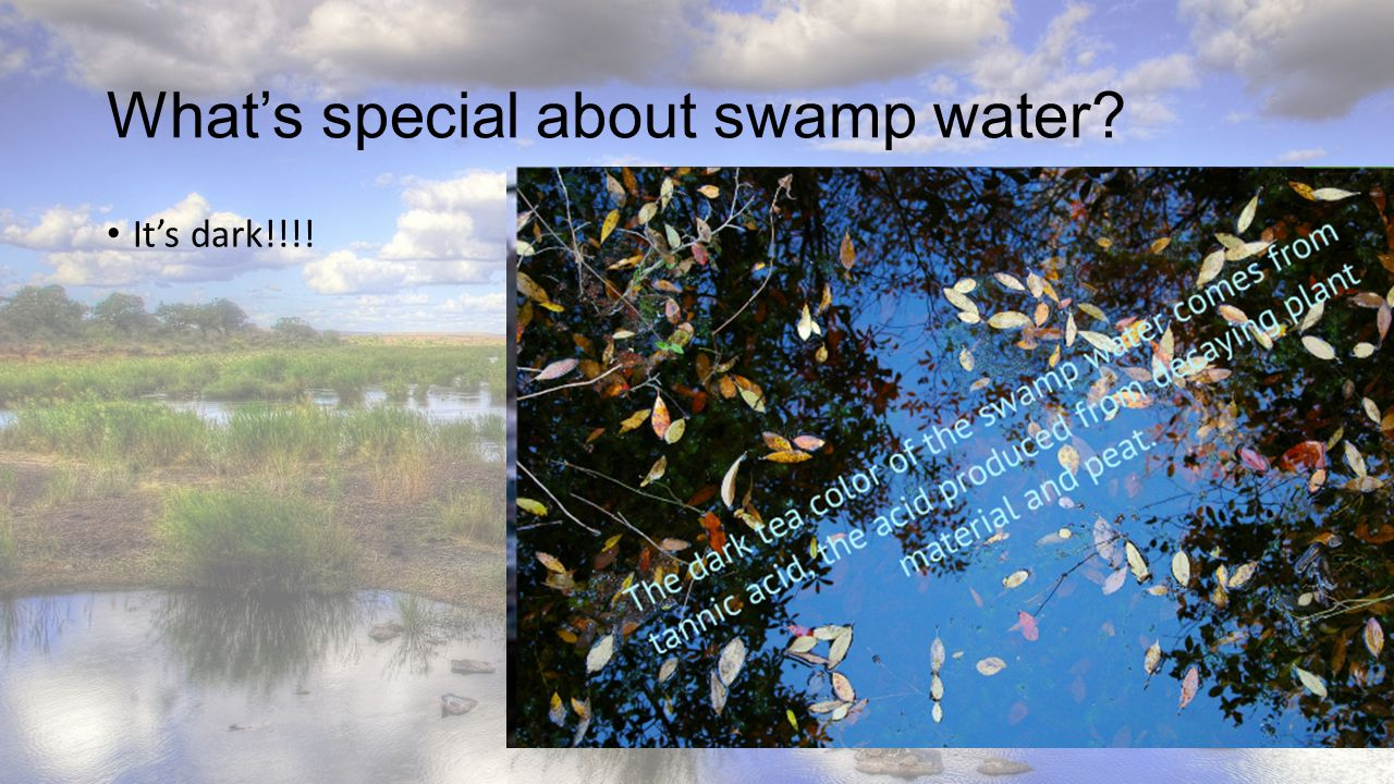 What's special about swamp water