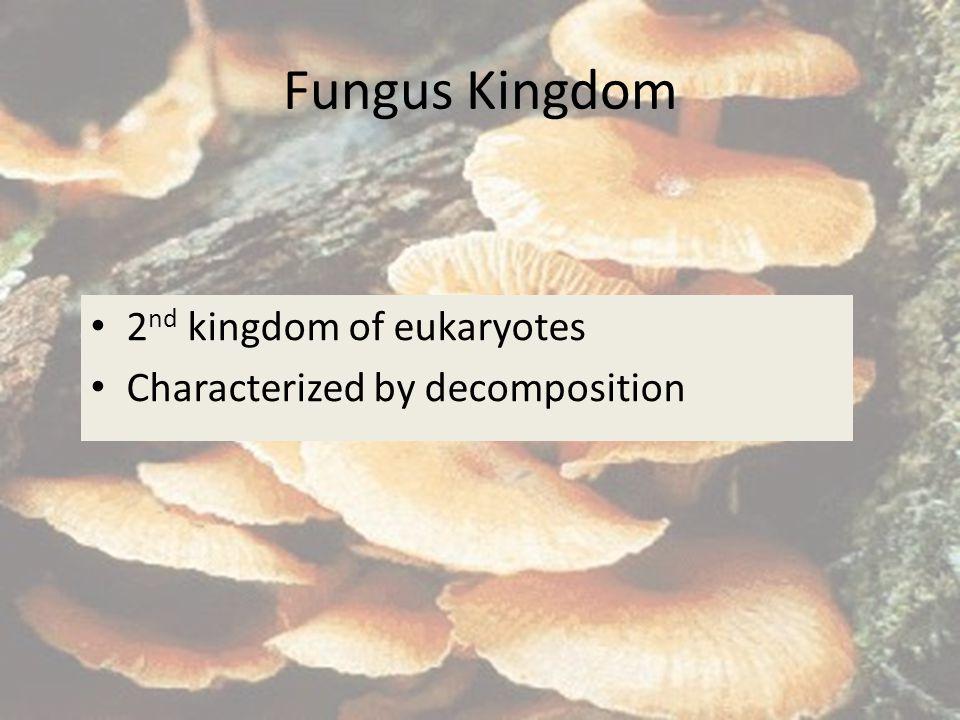 Fungus Kingdom 2nd kingdom of eukaryotes
