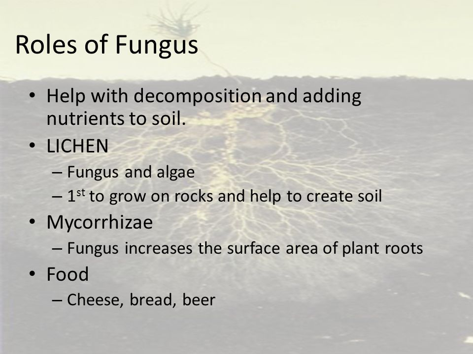 Roles of Fungus Help with decomposition and adding nutrients to soil.