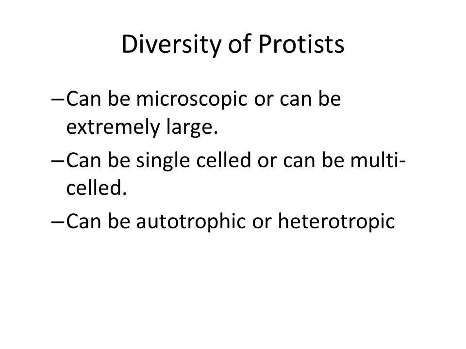 Diversity of Protists Can be microscopic or can be extremely large.