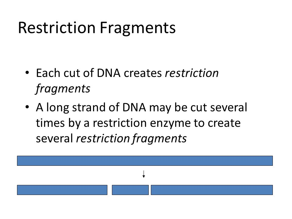 Restriction Fragments