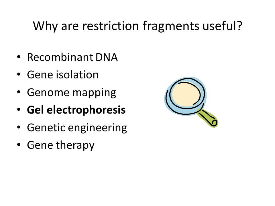Why are restriction fragments useful