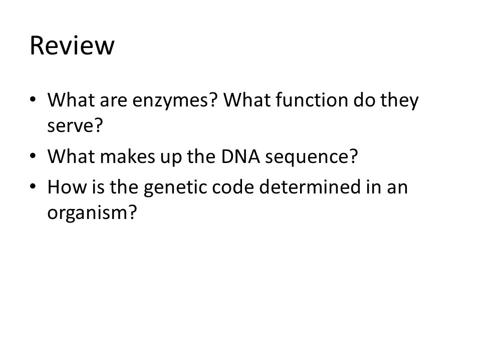Review What are enzymes What function do they serve