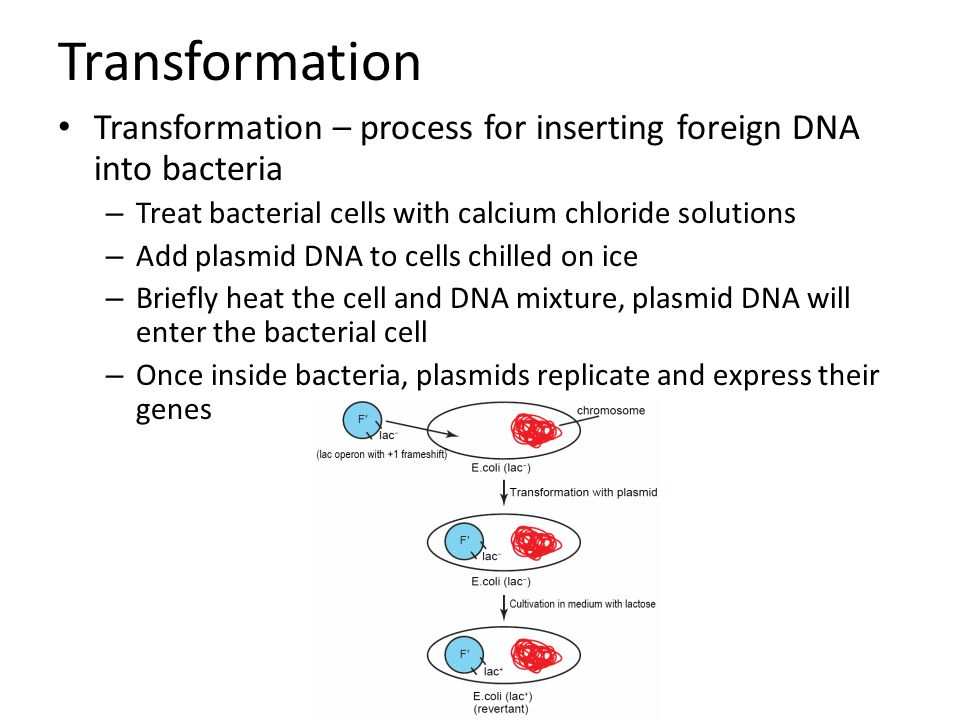 Transformation Transformation – process for inserting foreign DNA into bacteria. Treat bacterial cells with calcium chloride solutions.