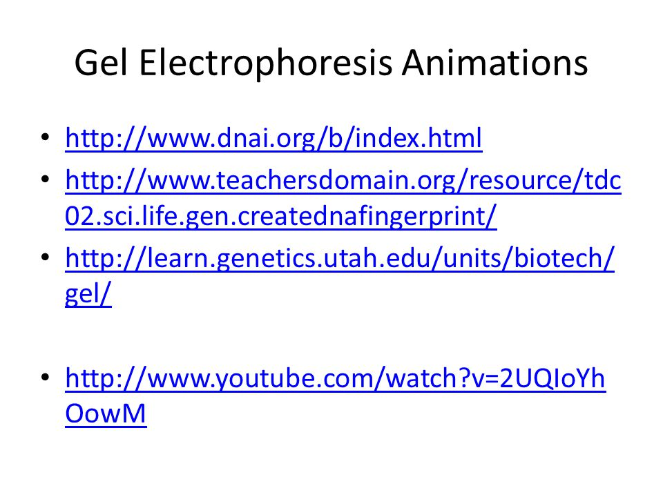 Gel Electrophoresis Animations