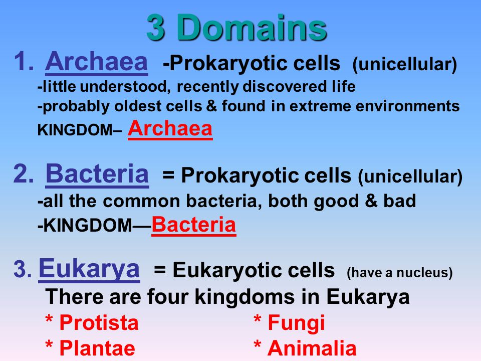 3 Domains Archaea -Prokaryotic cells (unicellular)