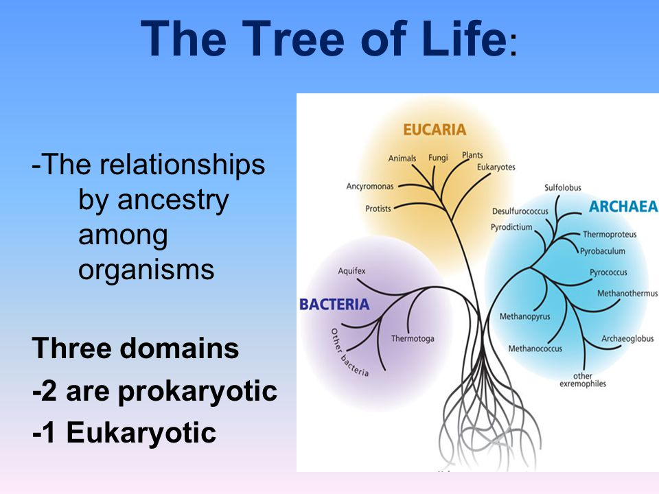 The Tree of Life: -The relationships by ancestry among organisms