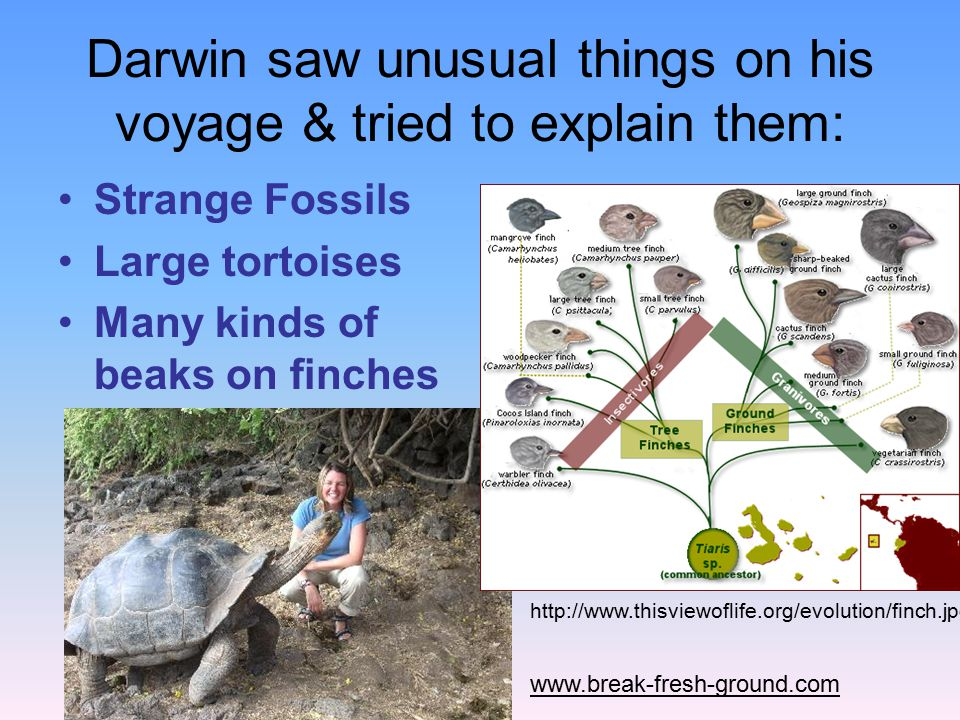 Darwin saw unusual things on his voyage & tried to explain them: