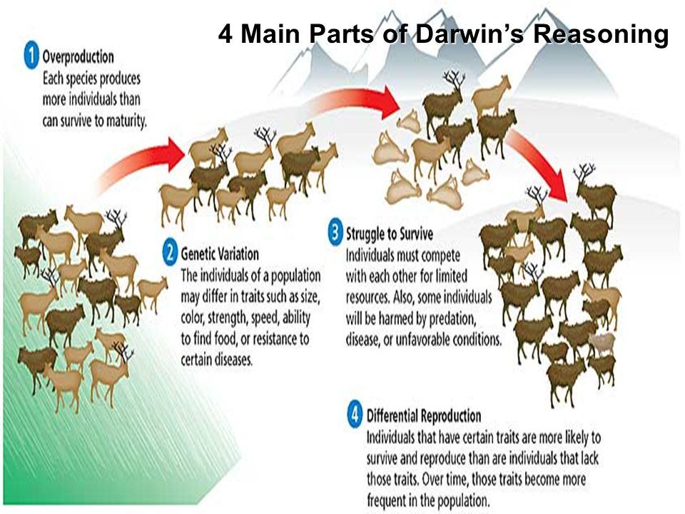 Chapter 15 4 Main Parts of Darwin's Reasoning Natural Selection