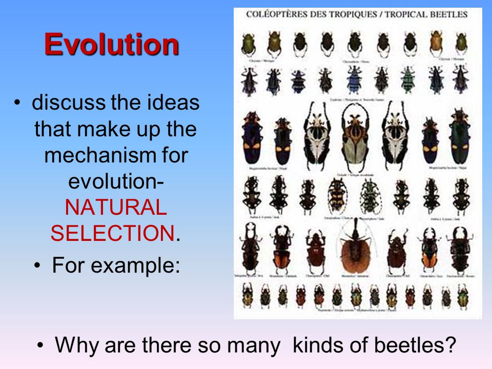 Evolution discuss the ideas that make up the mechanism for evolution- NATURAL SELECTION.