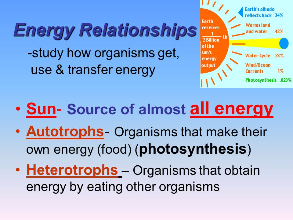 Energy Relationships -study how organisms get, use & transfer energy
